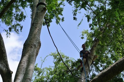 cabling tree service