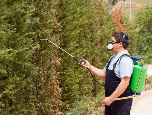 tree disease and pest control